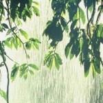 rain_forest_tropic1