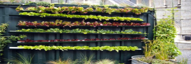 Vertical Wall Garden full of leafy greens