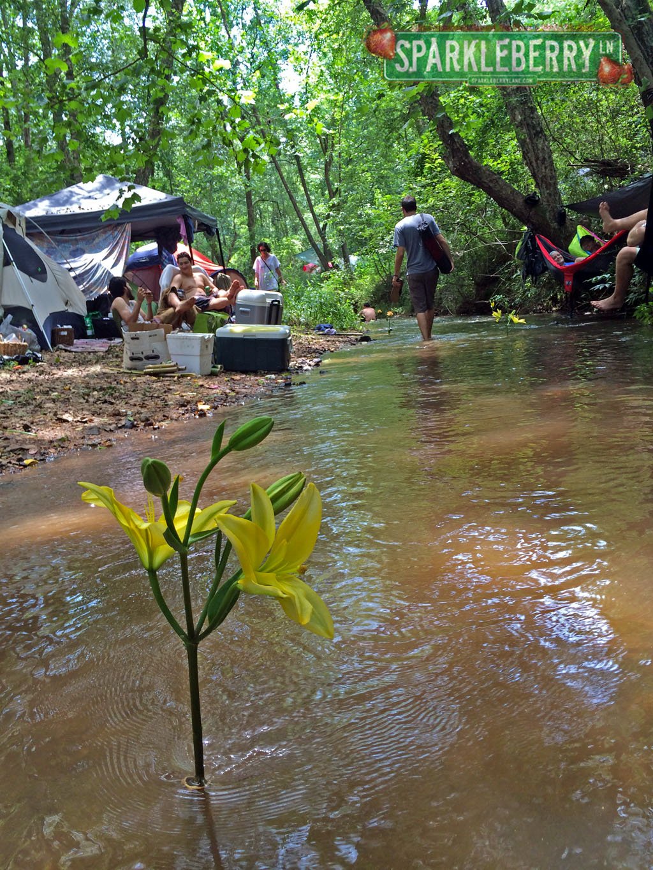 The Creek at Gratifly
